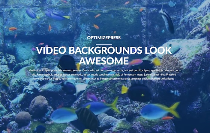 You can have full page background videos